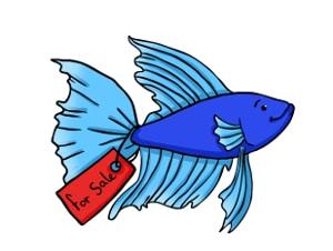 Betta fish for sale