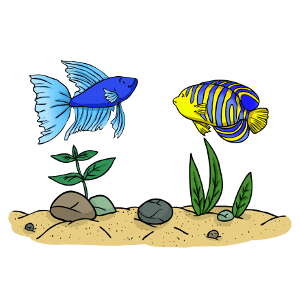 Can betta fish live with angelfish?