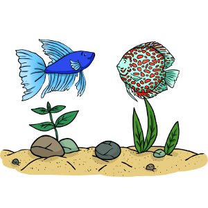 Can betta fish live with discus?
