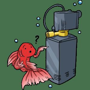 Do betta fish need filters?