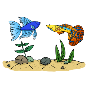 Can betta fish live with guppies?