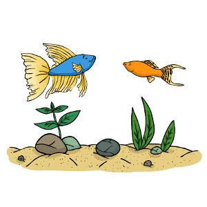 Can betta fish live with mollies?