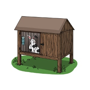 Where do rabbits live as pets? This rabbit lives outside, in a rabbit hutch