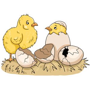 Hatching chickens