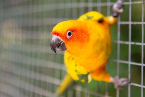Happy pet parrot
