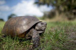 Keeping a tortoise as a pet