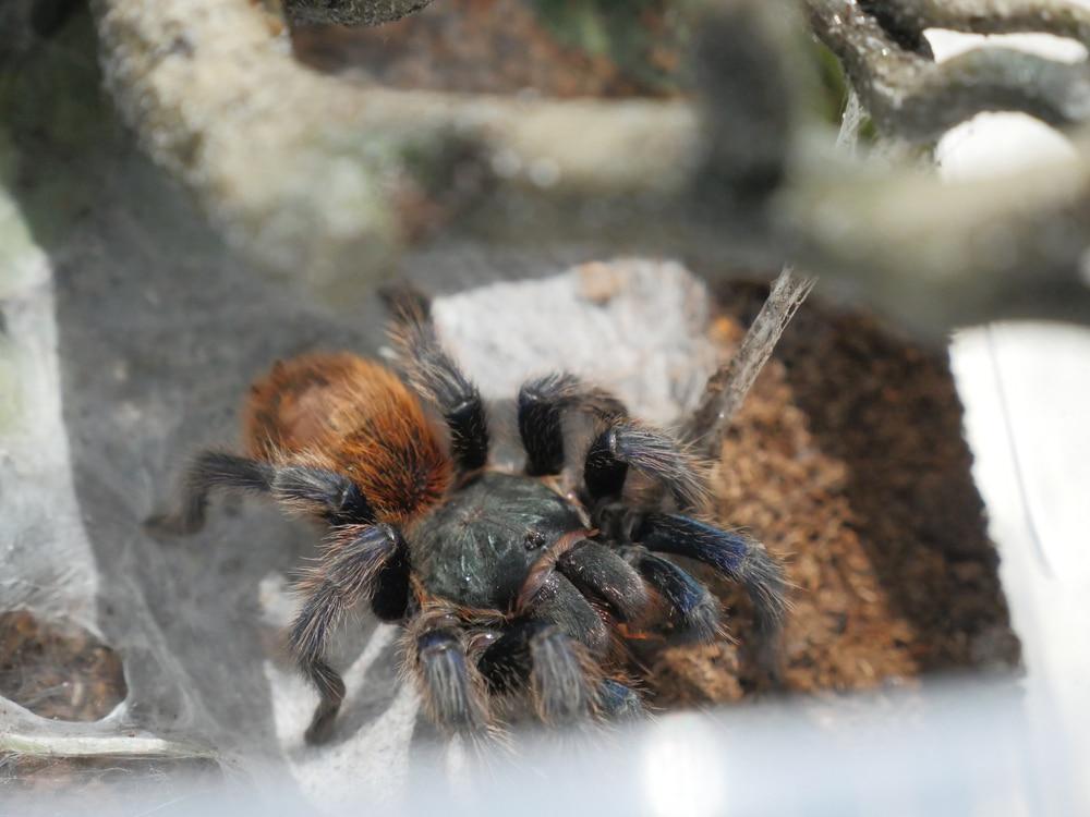 Tarantula Enclosure