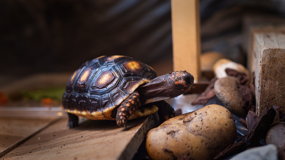 Tortoise enclosure